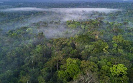 Amazon ormanlarının Facebook'tan yasadışı bir şekilde satıldığı ortaya çıktı