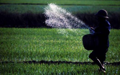 GÜBRETAŞ, tarımsal üretime öncülük ediyor
